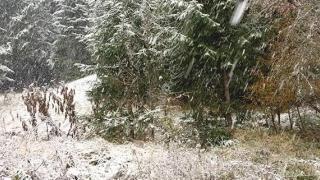 Frig pătrunzător și chiar ninsori, în prima parte a săptămânii