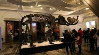 Noaptea Muzeelor: Sute de oameni stau la coadă ca să viziteze Muzeul Antipa