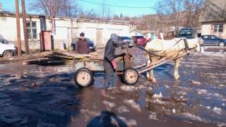 Nu se mai fură lemne din România, ci din Bulgaria!