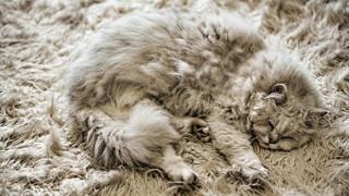 Recomandările veterinarilor pentru protejarea animalelor în perioadele cu temperaturi scăzute
