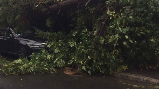 Tragedie: o femeie și un bărbat, uciși de o furtună puternică