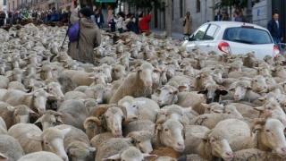 Înapoi în timp. O dată pe an, ciobanii spanioli trec cu oile prin centrul capitalei Madrid