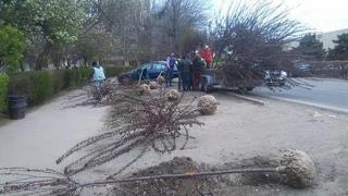 O nouă zi, alți arbori plantați în municipiul Constanța