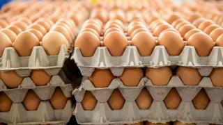 Două arestări, în scandalul ouălor contaminate cu fipronil