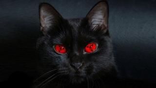 O pisică a lăsat pe întuneric mii de persoane