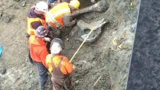 Oseminte de mamut găsite sub un stadion