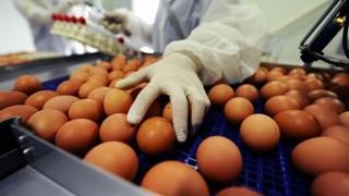 Scandalul ouălor contaminate: a fost utilizat al doilea insecticid neautorizat