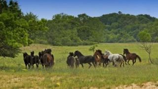 Pădurea Letea, zonă strict protejată, pășune pentru animalele fermierilor