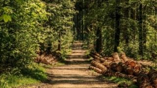 Plângere împotriva României pentru distrugerea pădurilor seculare