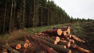 Pădurile sunt în pericol: Aproape 100 de dosare penale într-o săptămână, pentru infracţiuni în domeniul silvic