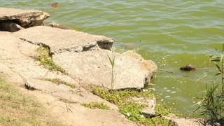Parcul și Lacul Tăbăcărie, poluate cu... nepăsare și așteptare