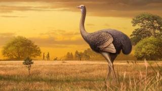 Scheletul unei păsări uriașe, descoperit în nordul Mării Negre