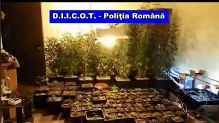 Operațiune de amploare la Constanța, într-un dosar de trafic de droguri