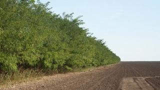 Ajutor pentru crearea perdelelor forestiere! Proprietarii de terenuri sunt vizaţi