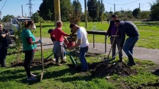 Constanța s-a îmbogățit cu 100 de copaci plantați de PES  Activists