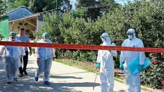 ANCHETĂ penală în cazul epidemiei de pestă porcină