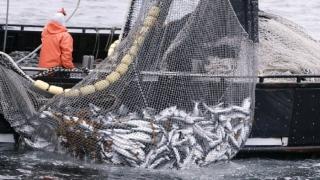 Peste 2,5 milioane de euro, pentru comunitățile pescărești din Mangalia