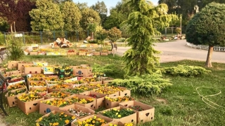 Peste 30.000 de flori, plantate în Țara Piticilor