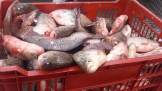 Zeci de tone de peşte, confiscate de poliţişti