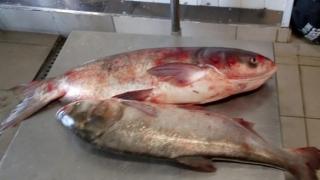 Peste 60 de kilograme de peşte, fără documente legale