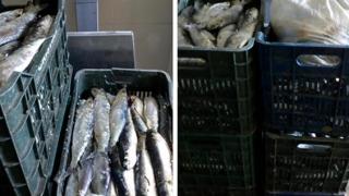 Pește transportat fără documente legale. Peste 200 de kilograme!
