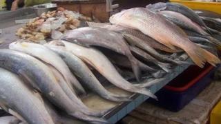 Alertă alimentară! Peşte ţinut în condiţii mizere în pieţe şi magazine din țară