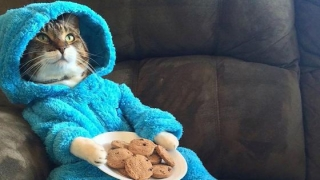 Ambasada SUA din Australia se scuză după ce a trimis invitaţii la o petrecere în pijamale, cu pisici