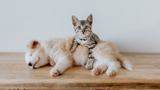 3 Motive pentru care sa achizitionezi mancare  pentru animale din cadrul unui magazin online