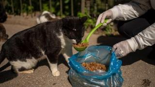 Cum se transmite coronavirusul de la om la pisică: felinele sunt cele mai vulnerabile la SARS-CoV-2