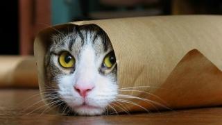 Și pisicile sunt capabile de memorie episodică