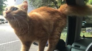 Sunt o pisicuţă găsită! Mă cunoaşte cineva?