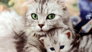 Cele mai tari pisici din lume, la la VIVO! Constanța