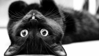 """27 octombrie, ziua pisicilor negre. Cu ce au """"greșit"""" de-a lungul istoriei"""