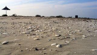 Nu deschideți pachete găsite pe plajă! Ar putea conţine droguri periculoase!