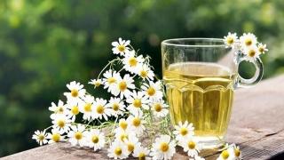 Planta miraculoasă pentru sănătate care seamănă cu soarele!