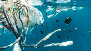 Începând de azi nu se mai vând obiecte de unică folosință din plastic