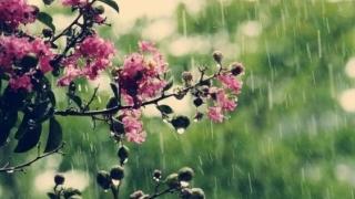 Plouă de Florii! ANM a emis o avertizare și pentru Dobrogea
