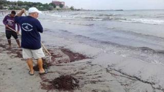 Mangalia. Plajă închisă din cauza poluării cu deșeuri petroliere