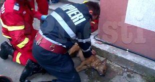 Un pompier cu suflet mare a resuscitat un câine scăpat dintr-un incendiu