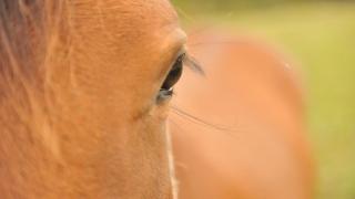 Precizări ANSVSA privind protecția animalelor utilizate în scopuri științifice
