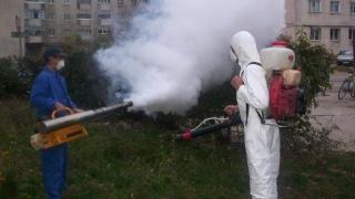 Primăria Constanța continuă lupta împotriva insectelor și rozătoarelor