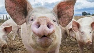 Probleme GRAVE descoperite de veterinarii constănțeni! Ce s-a întâmplat?
