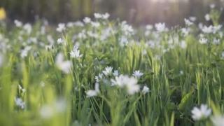 Prognoză actualizată. Cum va fi vremea de Florii şi de Paşte
