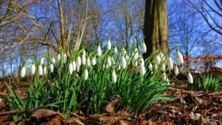 Prognoza vremii în Dobrogea la început de martie
