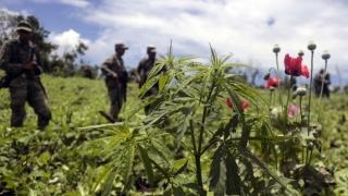 Legalizarea consumului de canabis în scop medical, în Mexic