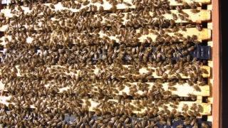 Propolisul - un produs apicol folositor, pe care-l gasesti in produse precum minuneanaturii propolis 30ml