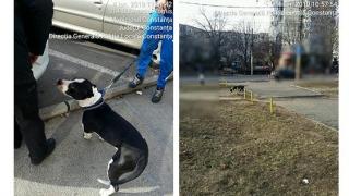 Proprietarii de câini periculoși, sancționați de polițiștii locali!