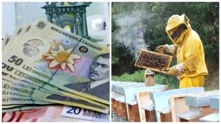 Apicultorii vor ieși la protest, dacă nu primesc ajutorul de minimis pentru 2016