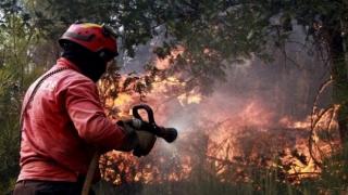 Incendiile de pădure s-au intensificat în Portugalia