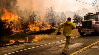 Incendiile din California au mistuit peste 1.000 de hectare de vegetație